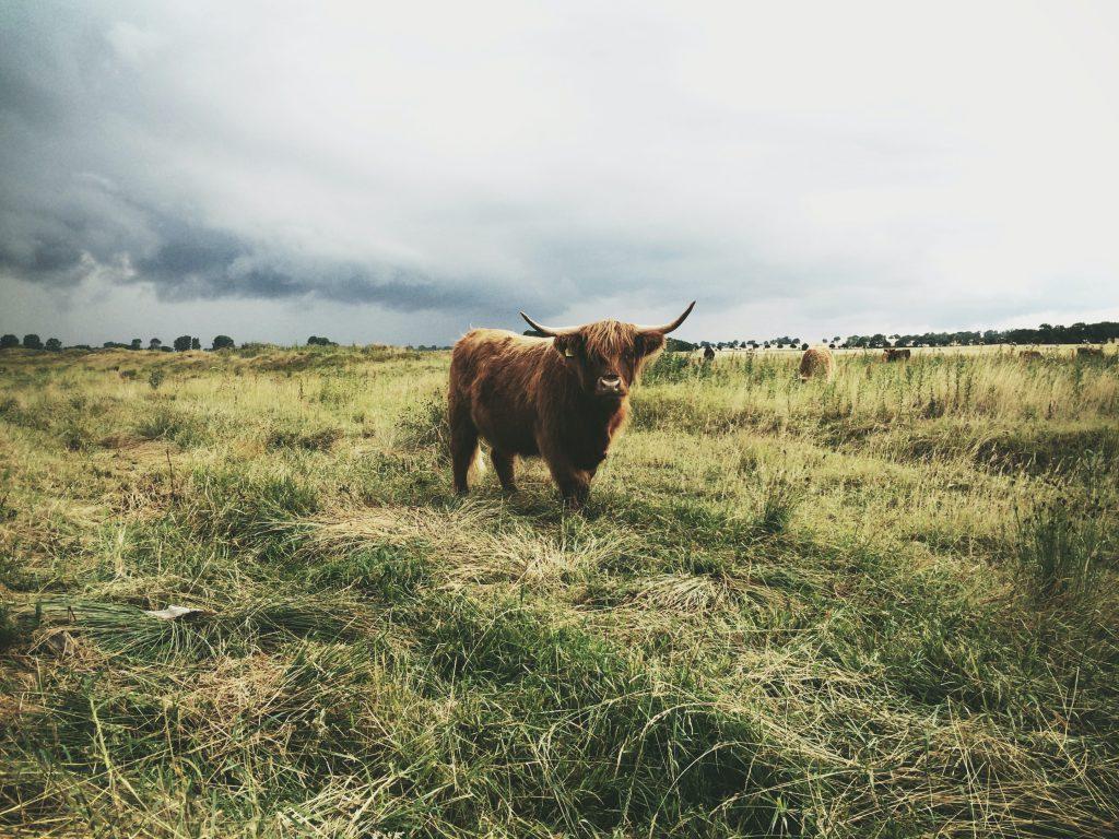 BALPro: Gemeinsam für eine neue Landwirtschaft